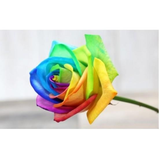 Two Dozen Rainbow Rose Bouquet