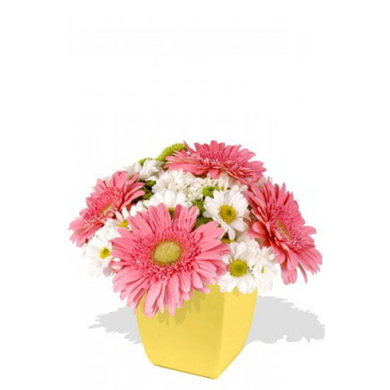 Mixed Chrysanthemum and Gerbera Bouquet
