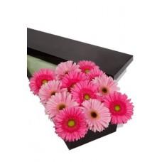 12 Gerberas Presentation Box